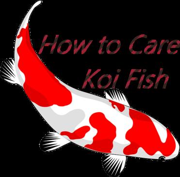 """How to Care Koi Fish : Pet Fish """"AQUARIUM"""""""