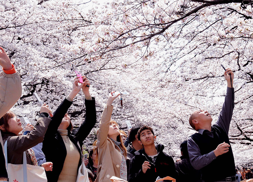 Travel Expectations Vs Reality (20+ Pics) - Anytime You're Admiring The Blooming Sakura Trees