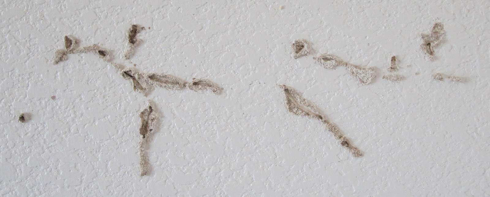 Termites Damage Ceiling Drywall : Suburban naturalist coming to terms with termites