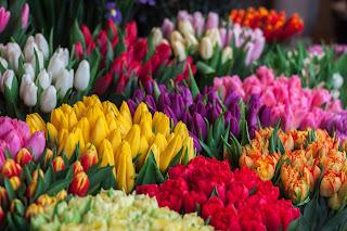 Bøtter med tulipanbuketter i en blomsterbutikk