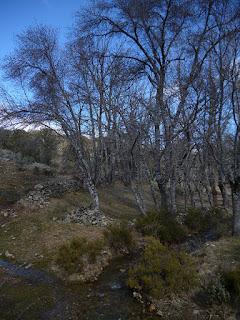 Arroyo de los Chozos
