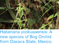 https://sciencythoughts.blogspot.com/2017/01/habenaria-yookuaaensis-new-species-of.html