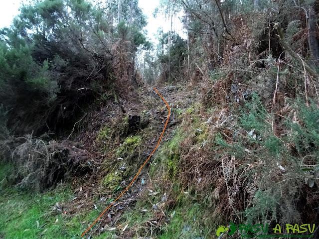 Alto la Corona o Pico La Ablanosa: Escalón en el bosque