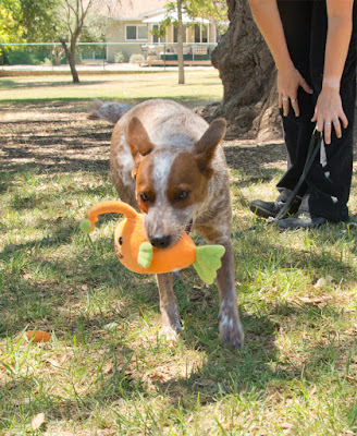 Dog carrying orange plush angler fish