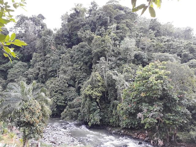 Taman Alam Raya Batang Toru