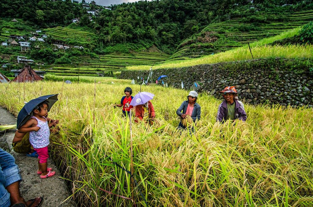 8th Wonder of the World Batad Rice Terraces Ifugao Cordillera Administrative Region Philippines Batad Rice Terraces Local Folk Farmer and a local Batad child