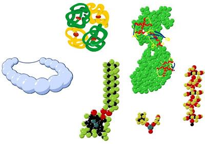 Все белки, несмотря на свои различия, состоят из одного и того же «строительного материала» – особых химических веществ – аминокислот.