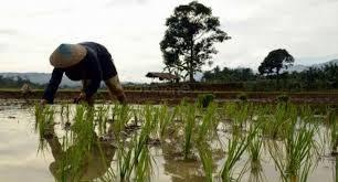 Ilmu Petani Berdasi Apa Itu Ilmu Pertanian