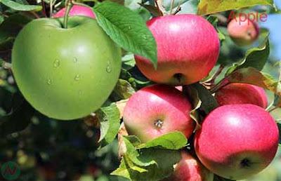 apple fruit; apple