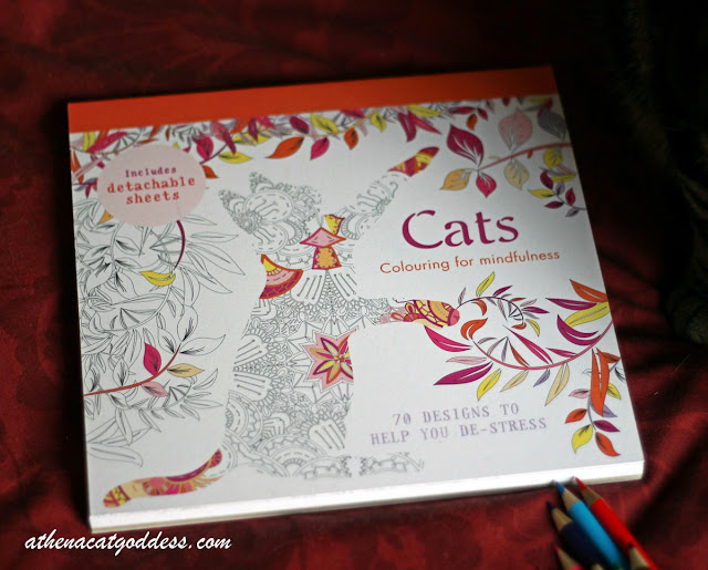cat colouring book