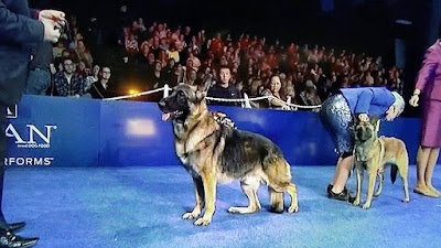 German Shepard, best in breed, pot of gold, US dog show