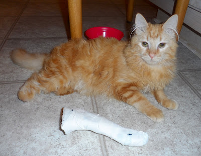 Mika with his OrthoPets Foot and leg Cast