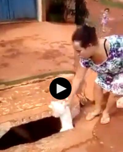 Mulher é flagrada jogando cachorro dentro de bueiro no DF — NOTÍCIA