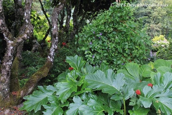 Descubriendo hojas vivero joy creek gbfling14 for Viveros zona sur