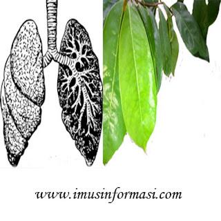 Manfaat Daun Sirsak Untuk Kanker Paru-paru Dan TBC