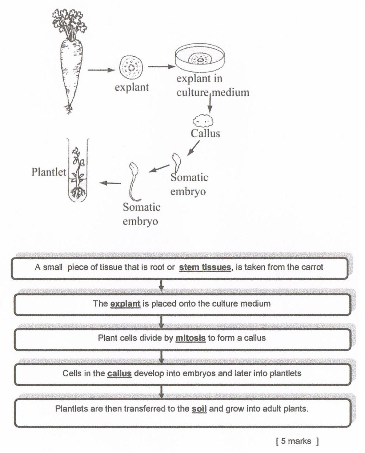 Biology Essay Form 4