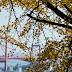 白山神社の銀杏~高塔山入り口@若松区白山