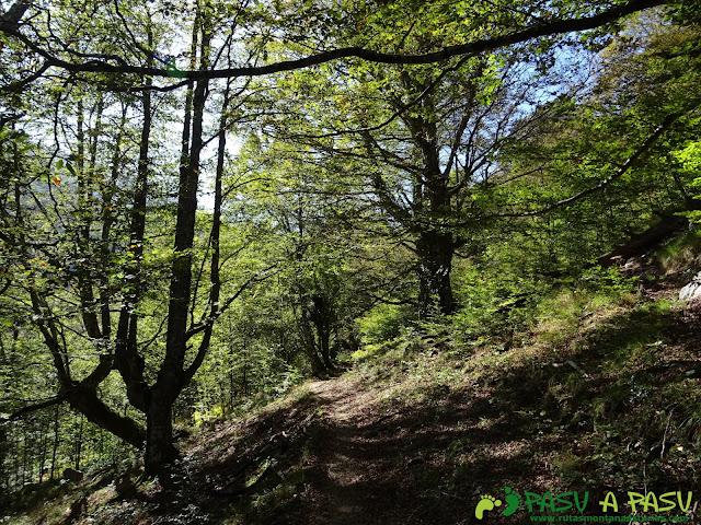 Ruta Vega Pociellu y Bosque Fabucao: Sendero en el Bosque de Fabucao
