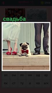 происходит свадьба, за которой наблюдает собака в бабочке
