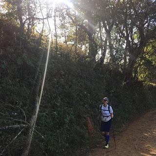 Trekking pole