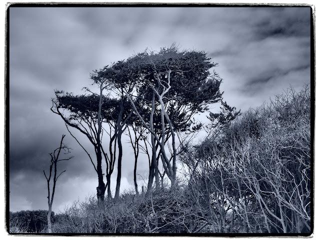 Schlanke Bäume und Gestrüpp