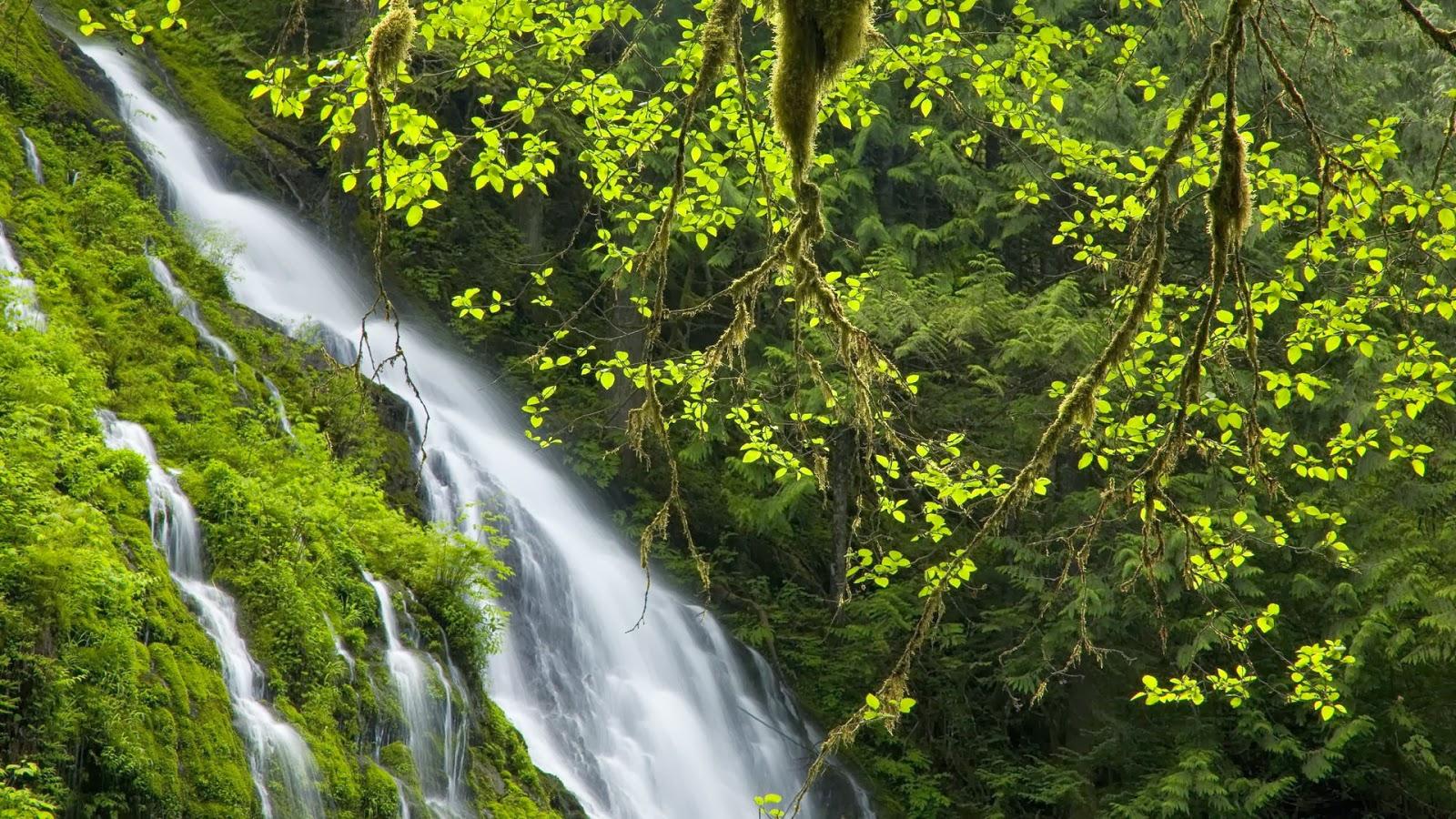 Groen landschap met watervallen