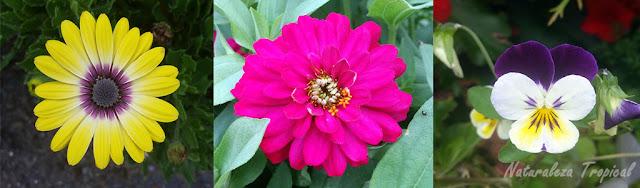 Diversidad de flores en angiospermas