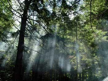 Crenças e Cultos das Florestas