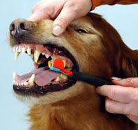 como cuidar los dientes del perro