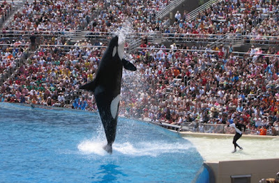 Sea World San-diego Tourist Attraction in California  Fully Characterized By Marine Mammals