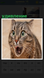 на морде кошки удивление с круглыми глазами и открытой пастью