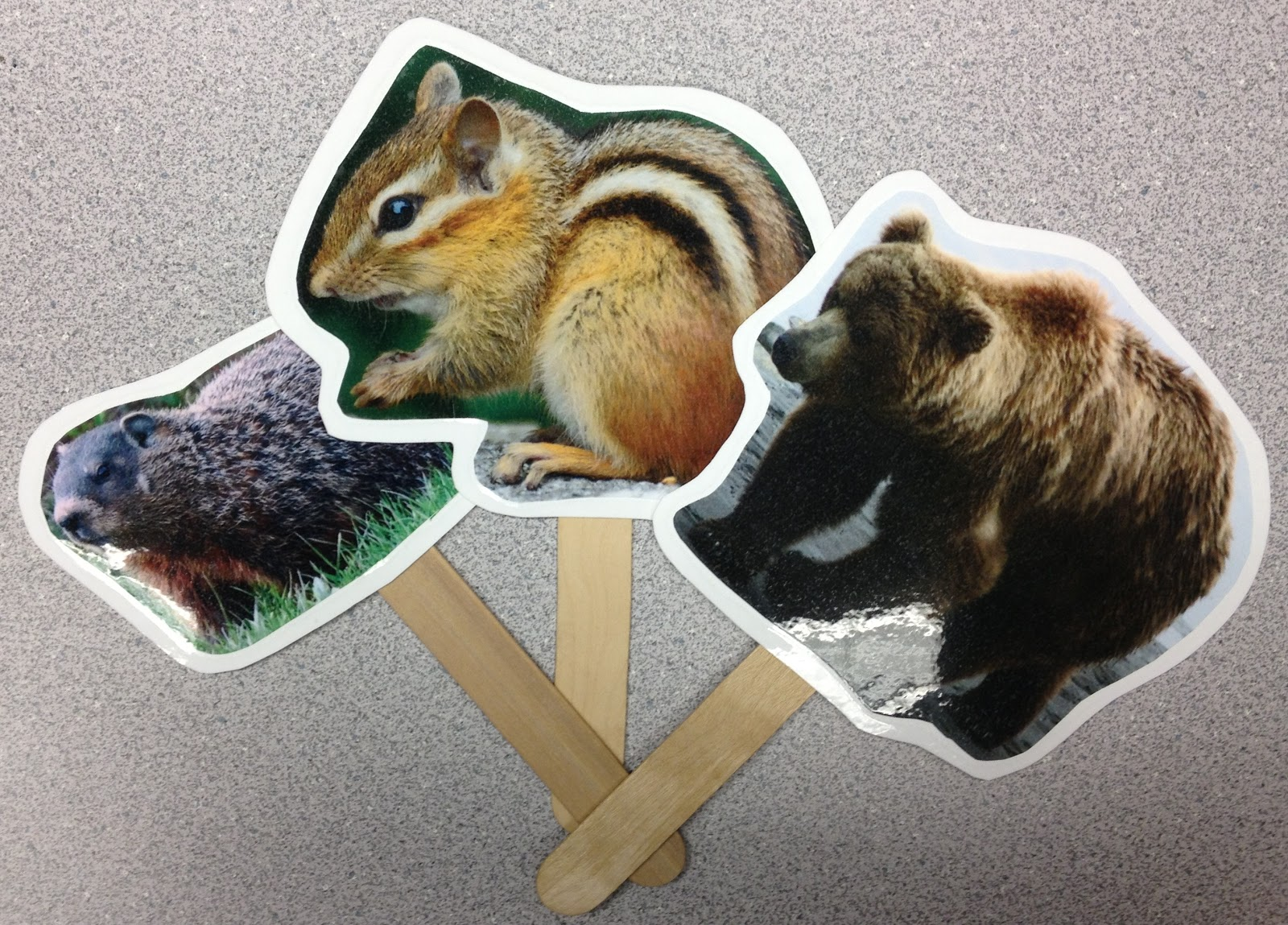 Bear Hibernation Preschool Craft