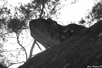 La tête de la Tortue Luth de Franchard, Fontainebleau