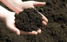 phân hữu cơ trong sản xuất nông nghiệp