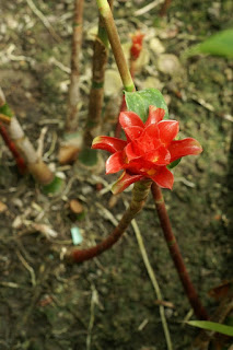 Photo de Zingibérale