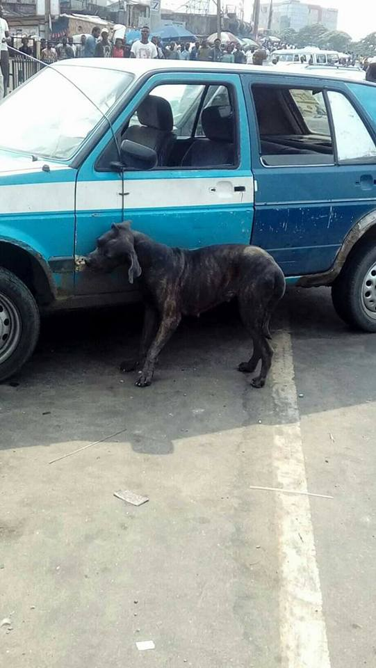 Dog Killed In Port-Harcourt After Being Accused Of Transforming From A Man. PICS