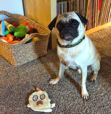 Liam the pug with his BarkBox toy
