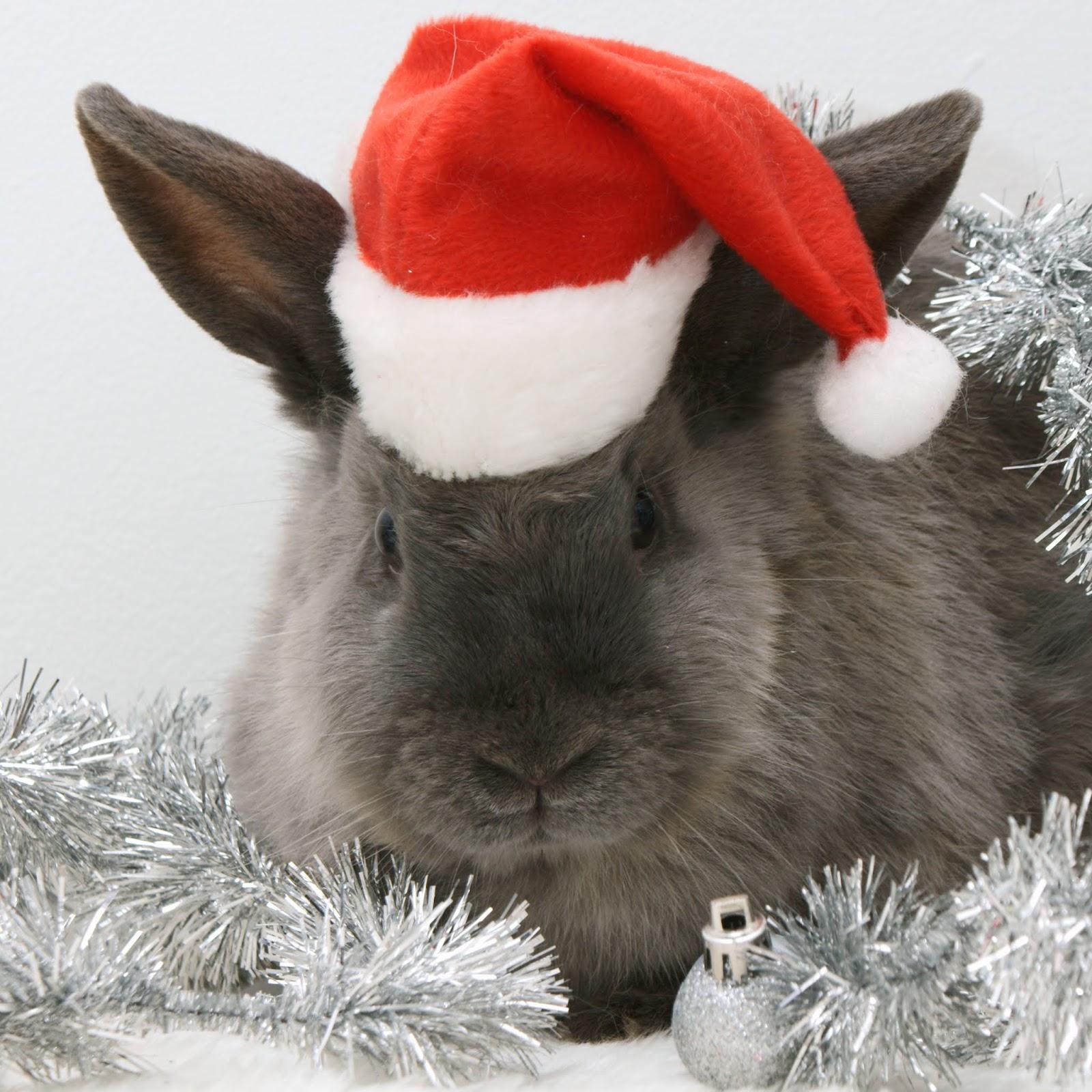 Картинки года кролика, мальчику лет