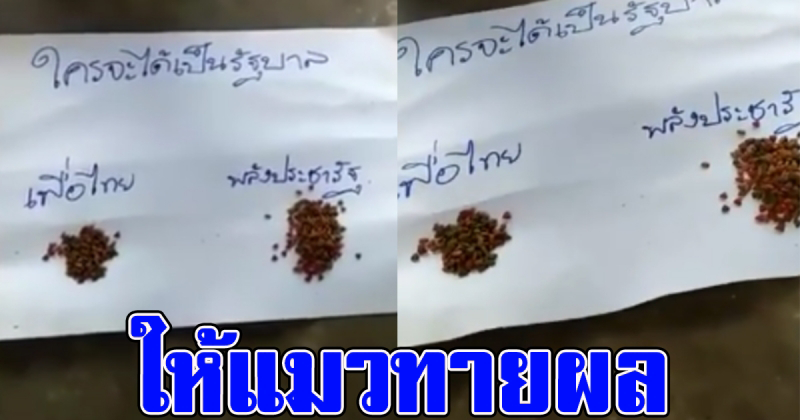 ลุ้นสุดขีด หนุ่มวางอาหารเขียนชื่อพรรค ให้แมวเลือก ใครจะได้เป็นรัฐบาล สุดท้ายพีคหนักมาก (คลิป)