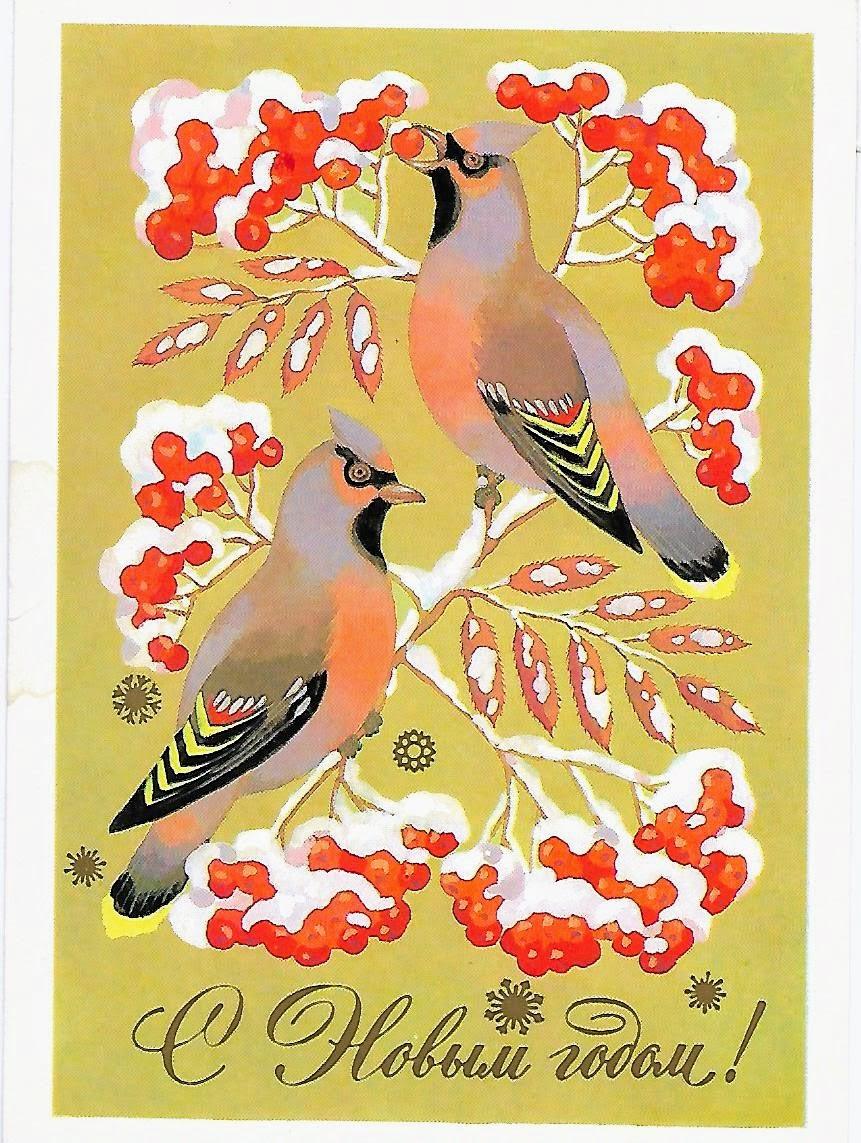 открытки с новым годом 1980 с птицами назвал впоследствии бухту