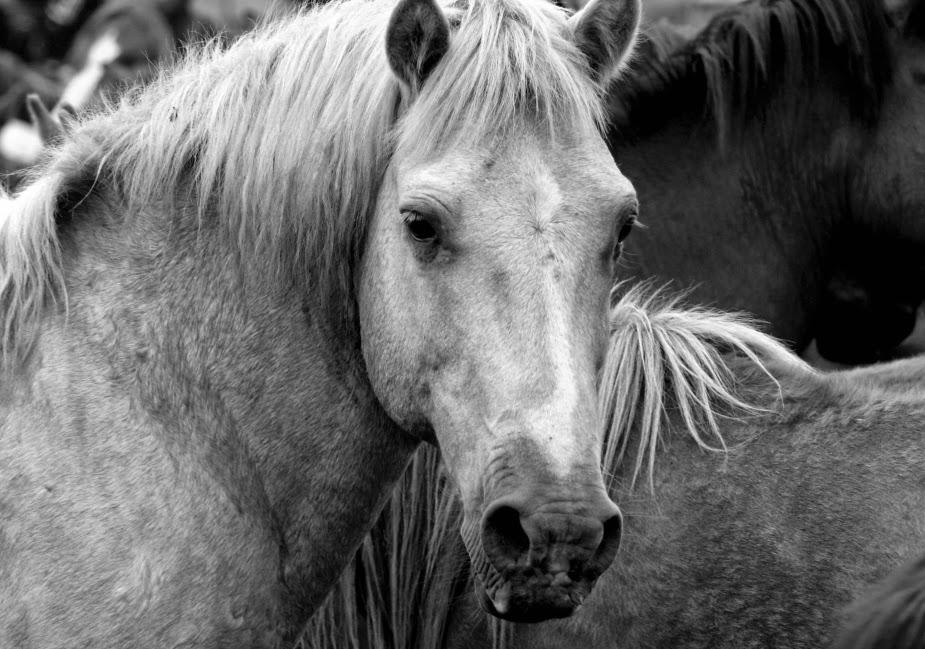 fotografía de animales en blanco y negro, imágenes, fotos creativas, artística,
