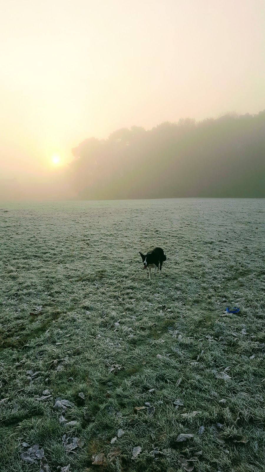 Mollies Foggy And Frosty Walk
