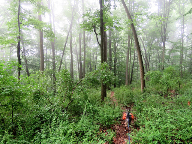 Gone Hikin': Highlands Trail NJ Section 7 - Voorhees State