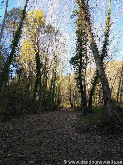 Entre chopos en la ruta de senderismo de los castaños Parauta