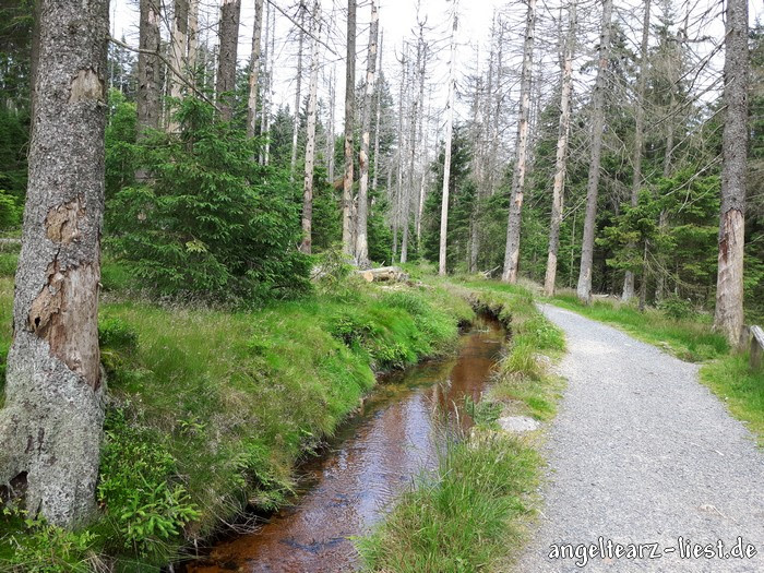 Goetheweg im Harz
