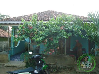 FOTO 1 : Rumah sederhana jadi cantik dengan bunga Melati Belanda - Go Green