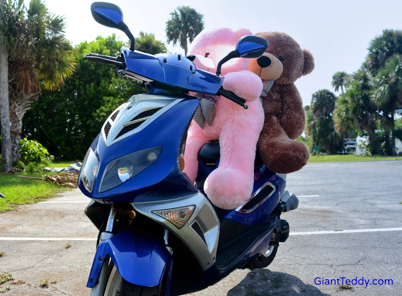 Giant Teddy bear Lady Cuddles races around Florida on a bright blue scooter