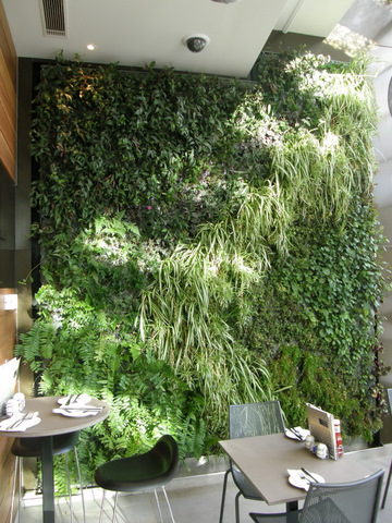 Living Wall Systems Living Wall Art Urban Gardening