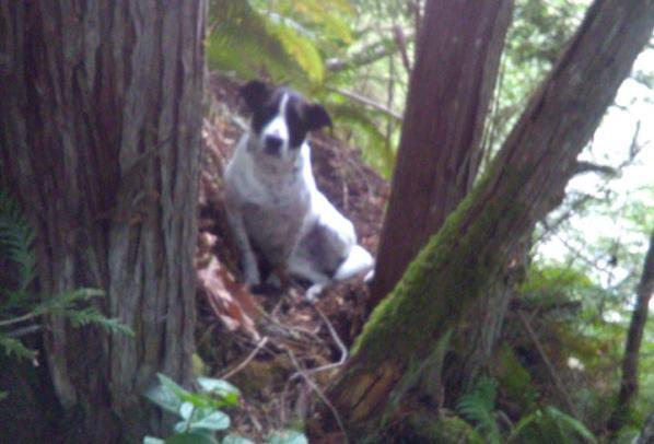 """""""قصة وفاء"""" كلب يحرس جثة صاحبه لغاية العثور عليه! (صور)"""