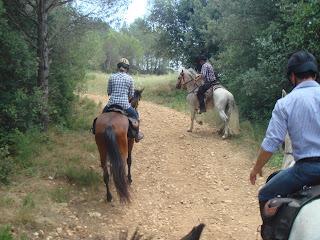 Espanja, katalonia, Costa Brava, ratsastusmatka, PRE-hevonen